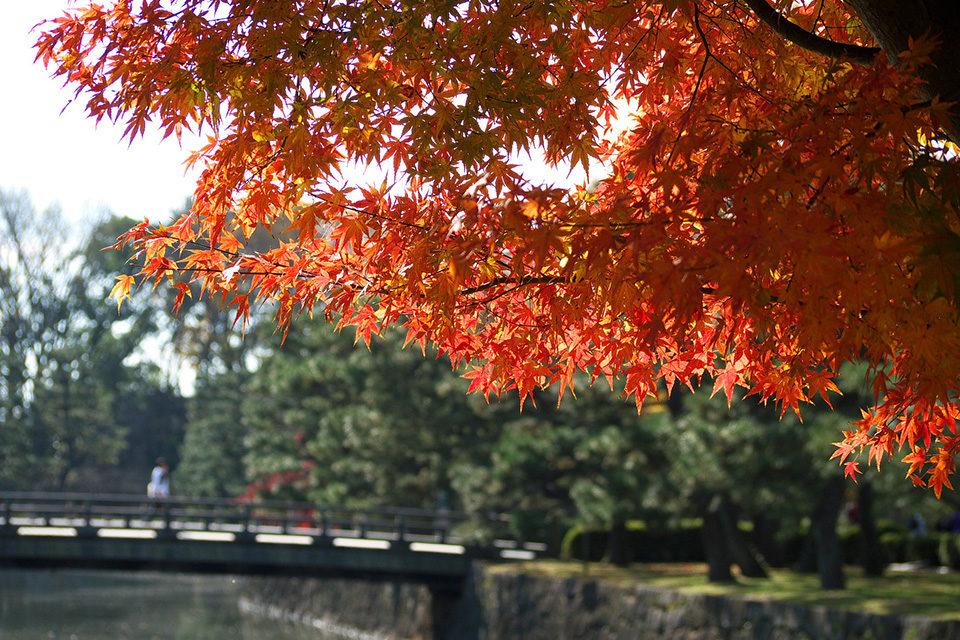 京都・二条城紅葉観光情報