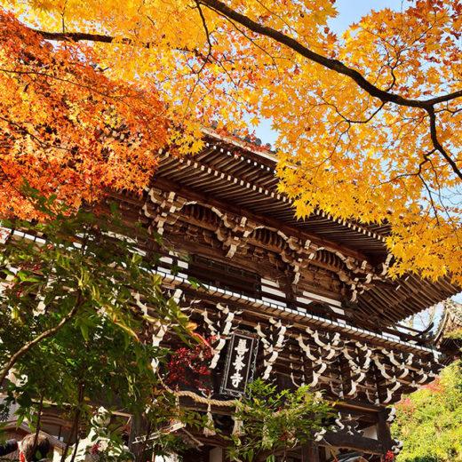 京都の善峯寺 紅葉