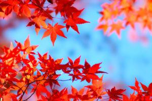 在人流量暴增的京都楓葉季,最好選擇工作日出行有效嗎?