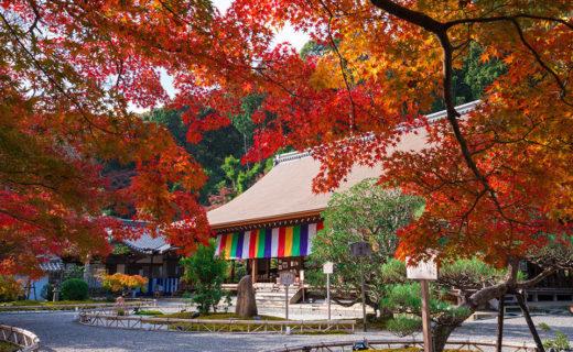 京都二尊院の紅葉