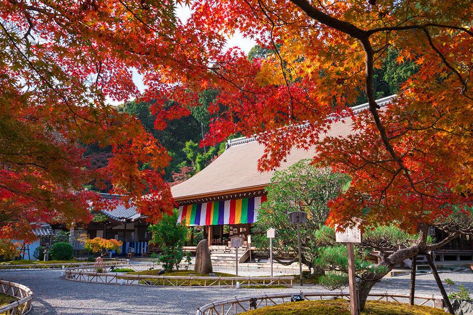 「紅葉の馬場」で知られる嵯峨野の名刹、二尊院は、嵯峨野の秋を堪能するのなら、外せないスポットです