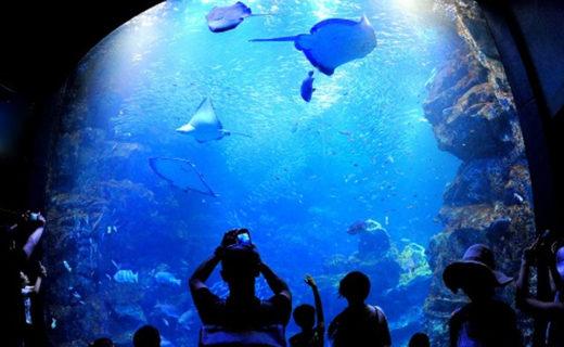 京都水族館-京の海