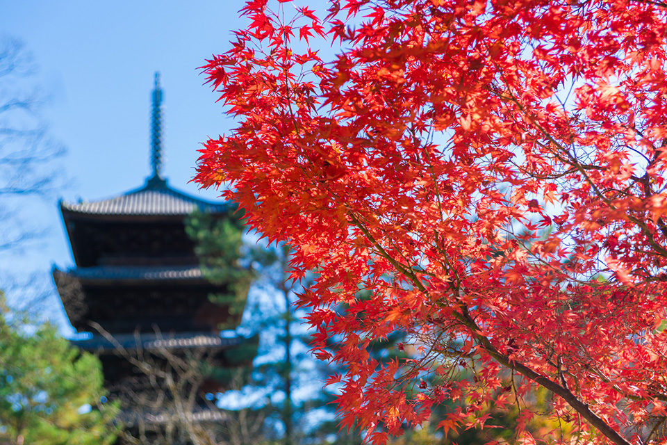 外国人も京都の紅葉が大好き!日本人はもちろん外国人にも人気の高い紅葉の名所をご紹介します!!