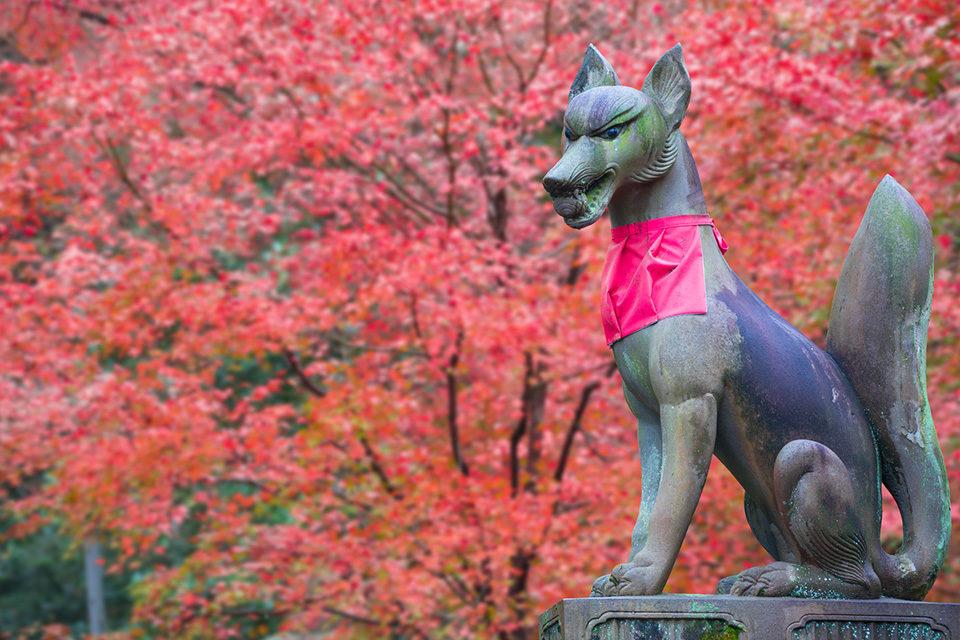 秋は紅葉、そう決めつけていると伏見の魅力を見落としてしまうかも。伏見を知って、伏見を楽しむための総ざらえ。