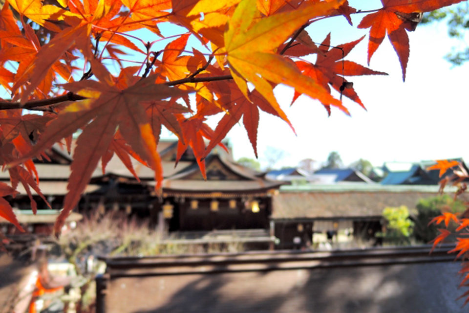 人が少なくゆったりと散策できるのはここ!!秋の京都でも比較的混雑の少ないおすすめ紅葉スポットをご紹介!