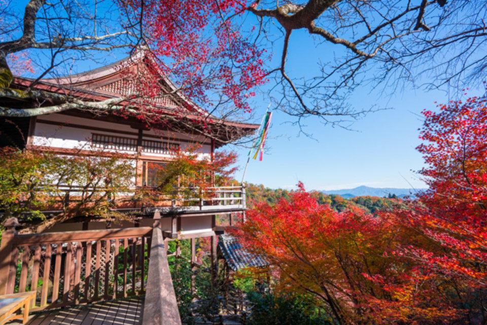 千光寺の紅葉