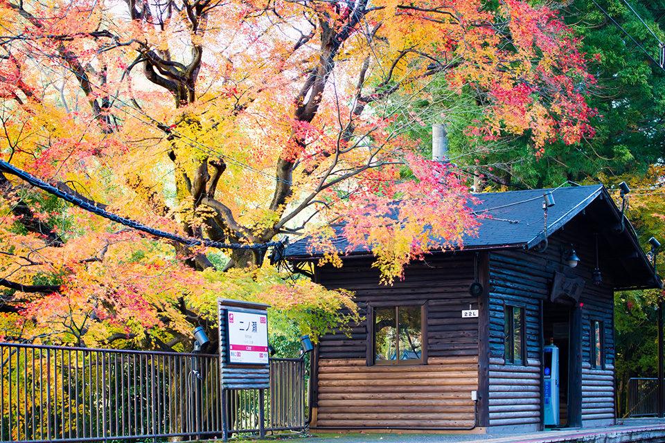京都・叡山電車の「もみじのトンネル」は必見!昼間も日没後も楽しめる紅葉の名所で、秋の京都を満喫しましょう!