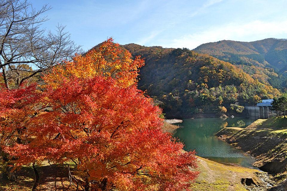 大野ダムの紅葉