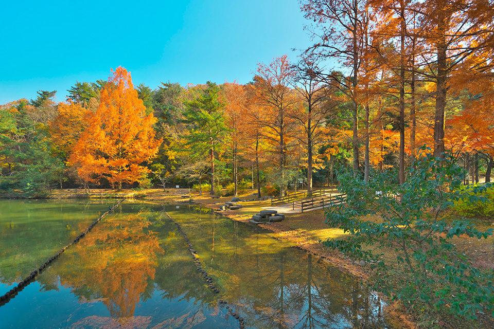 宝が池の秋