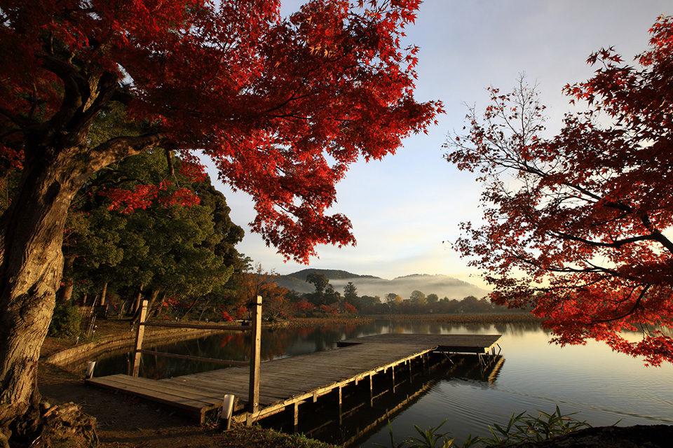 広沢池の紅葉