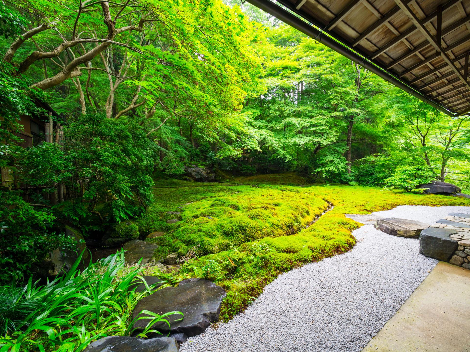 春の京都 瑠璃光院の庭