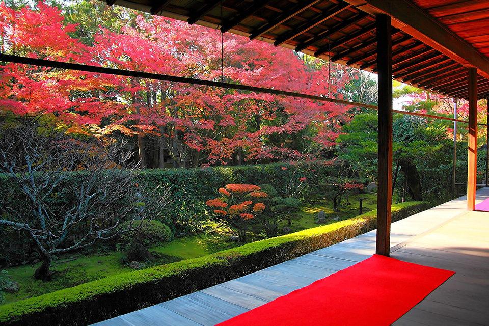 桂春の紅葉