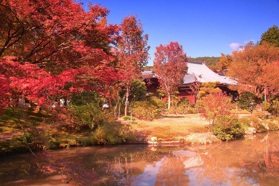 京都法金剛院