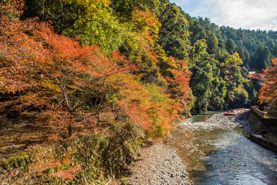 清滝川沿いの紅葉