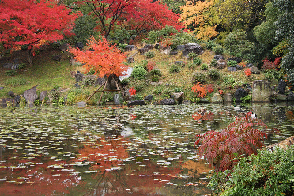 秋の渉成園の庭