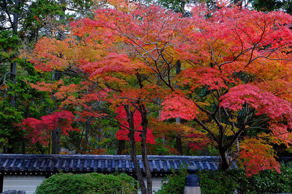 西芳寺の紅葉