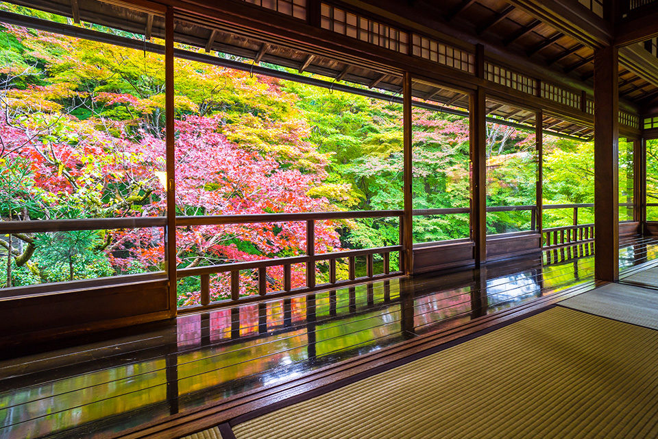 錦秋の瑠璃光院