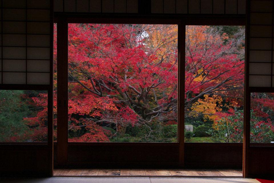 額縁越しに見る庭園の紅葉はまるで美しい絵画!京都の額縁スポットをご紹介!!
