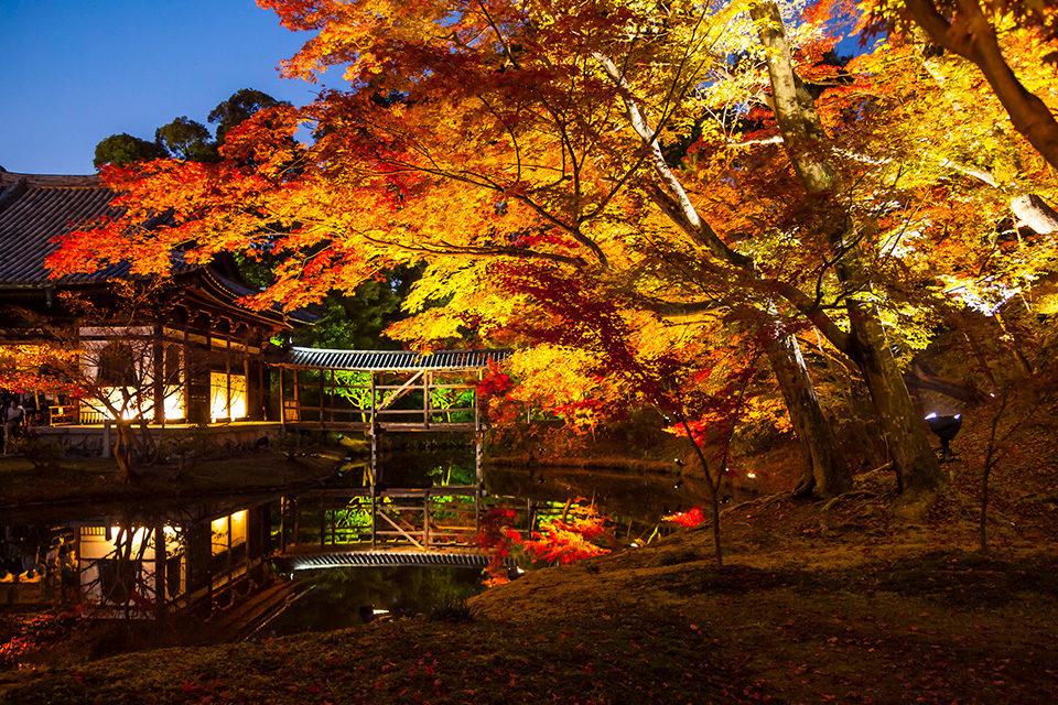 京都の代表的な繁華街・祇園。京都・祇園で楽しむことができる紅葉スポットと見どころをご紹介します!