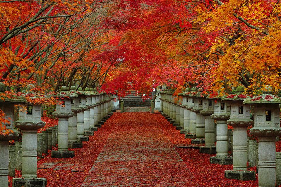 紅葉の高山寺