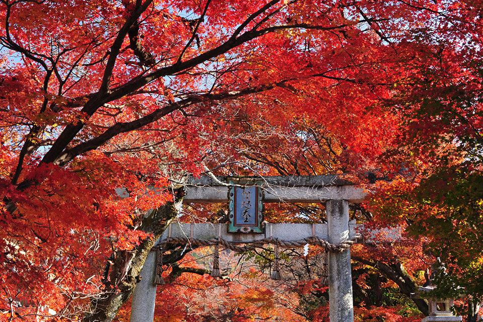 Saginomori-Jinja Shrine