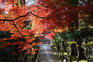 When is the best time to observe Kyoto red leaves? Recommend the sightseeing spots both for red leaves and interesting views.