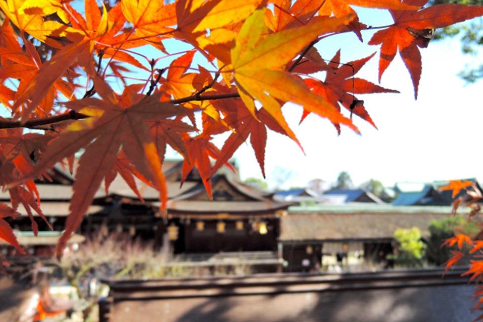 京都の紅葉シーズン