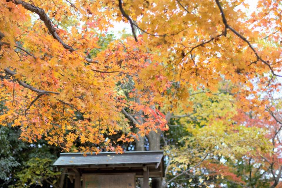 京都公園の紅葉