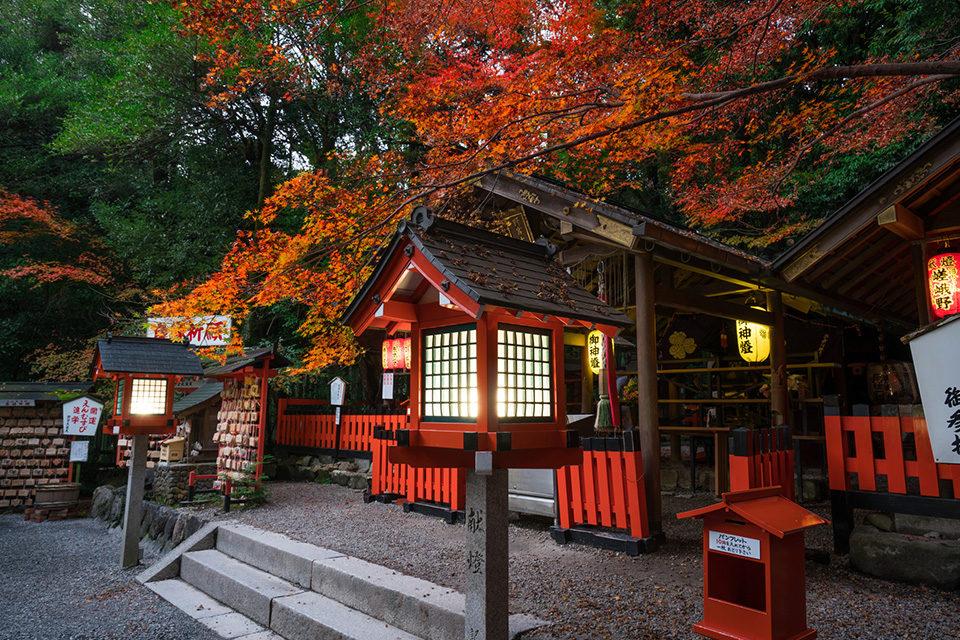 京都野宮神社の紅葉