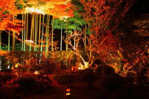 宝泉院のライトアップ