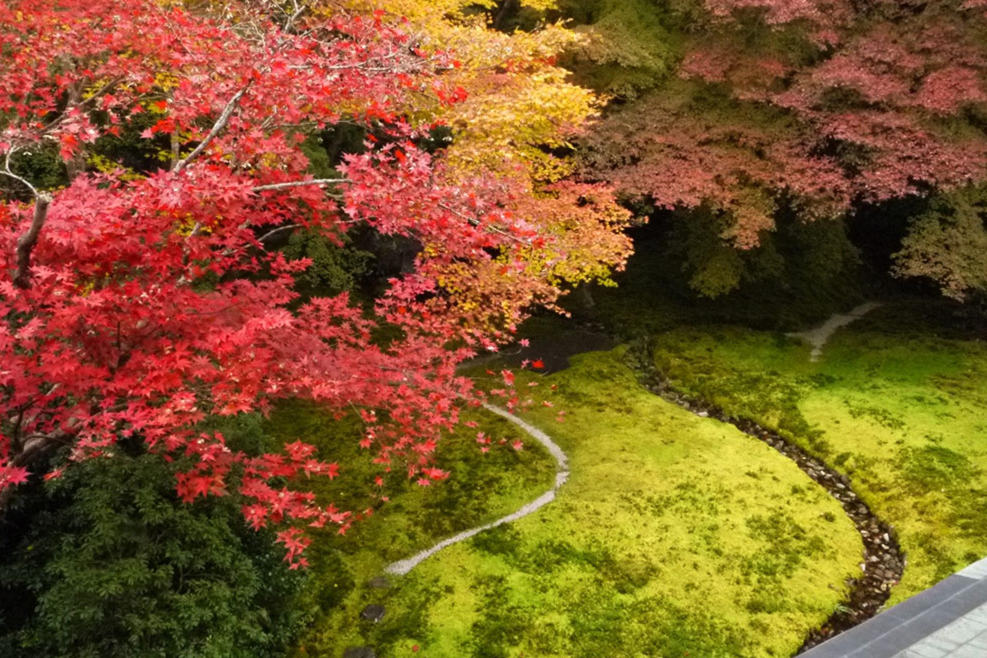 秋の特別公開