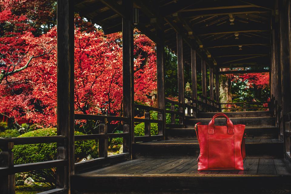 京都 大覚寺の紅葉