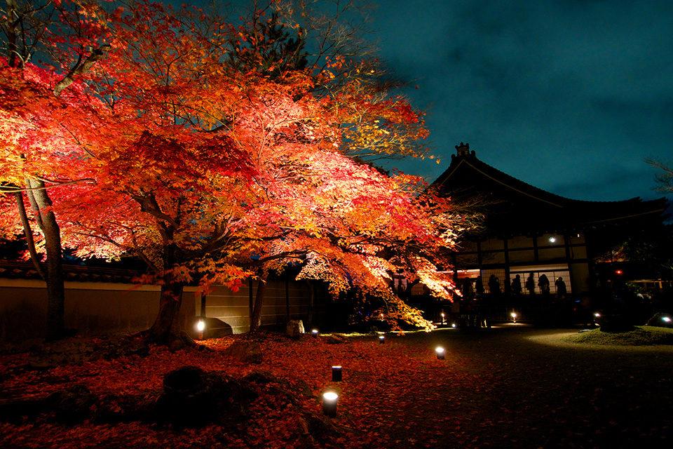 京都 高台寺 紅葉 ライトアップ