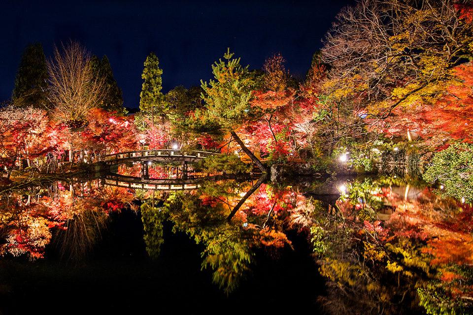 京都 永観堂のライトアップ