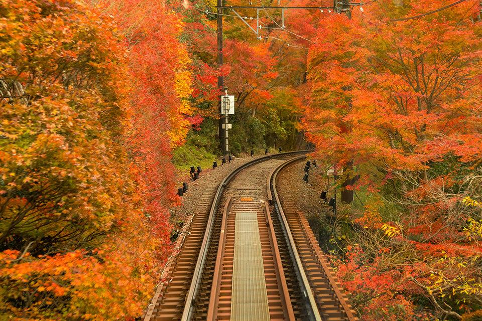 京都 叡山電車 市原―二ノ瀬「もみじのトンネル」
