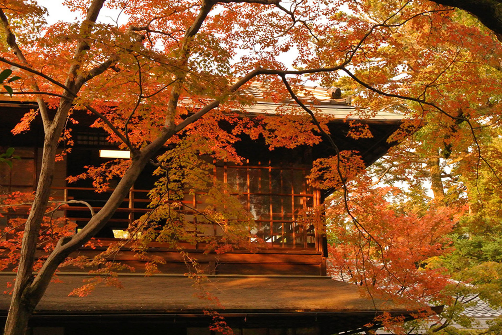 京都 無鄰菴 紅葉