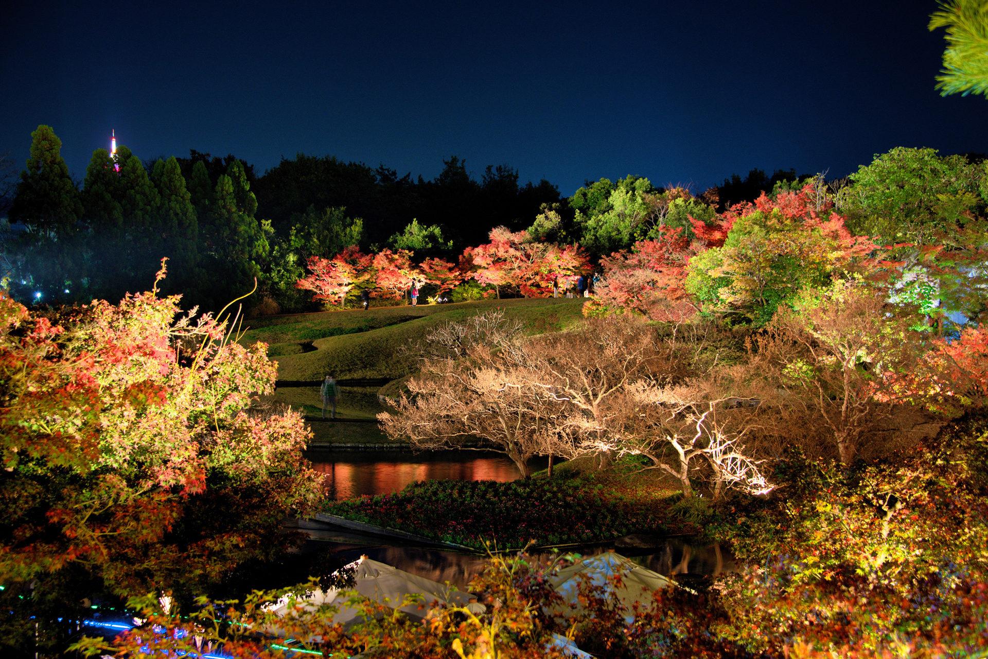 京都 梅小路公園 ライトアップ