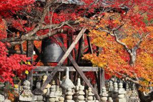 11月漫山紅葉的京都旅遊觀光時的服裝穿著指南