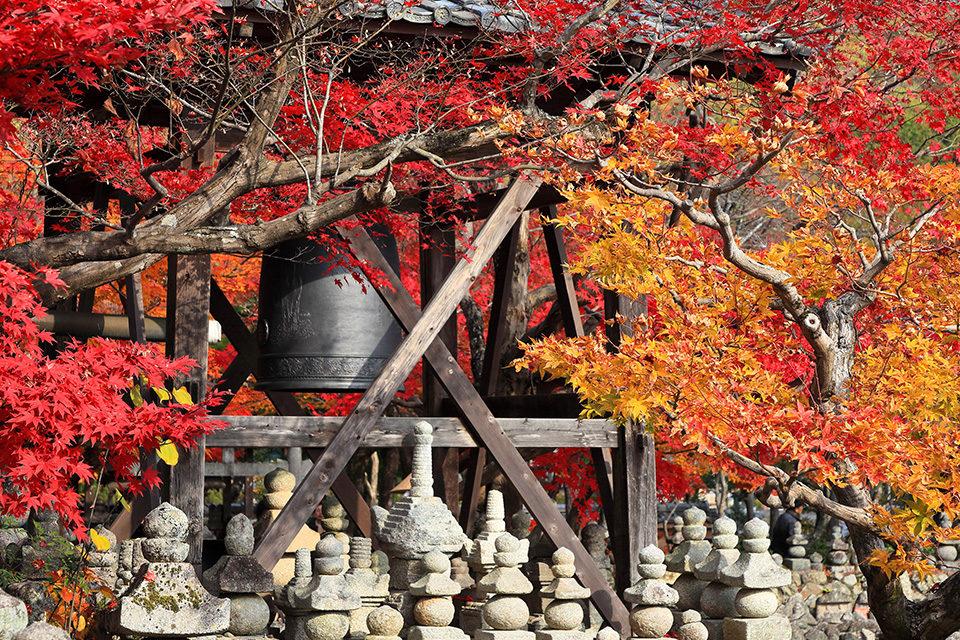 京都の紅葉が最も美しい11月。服...