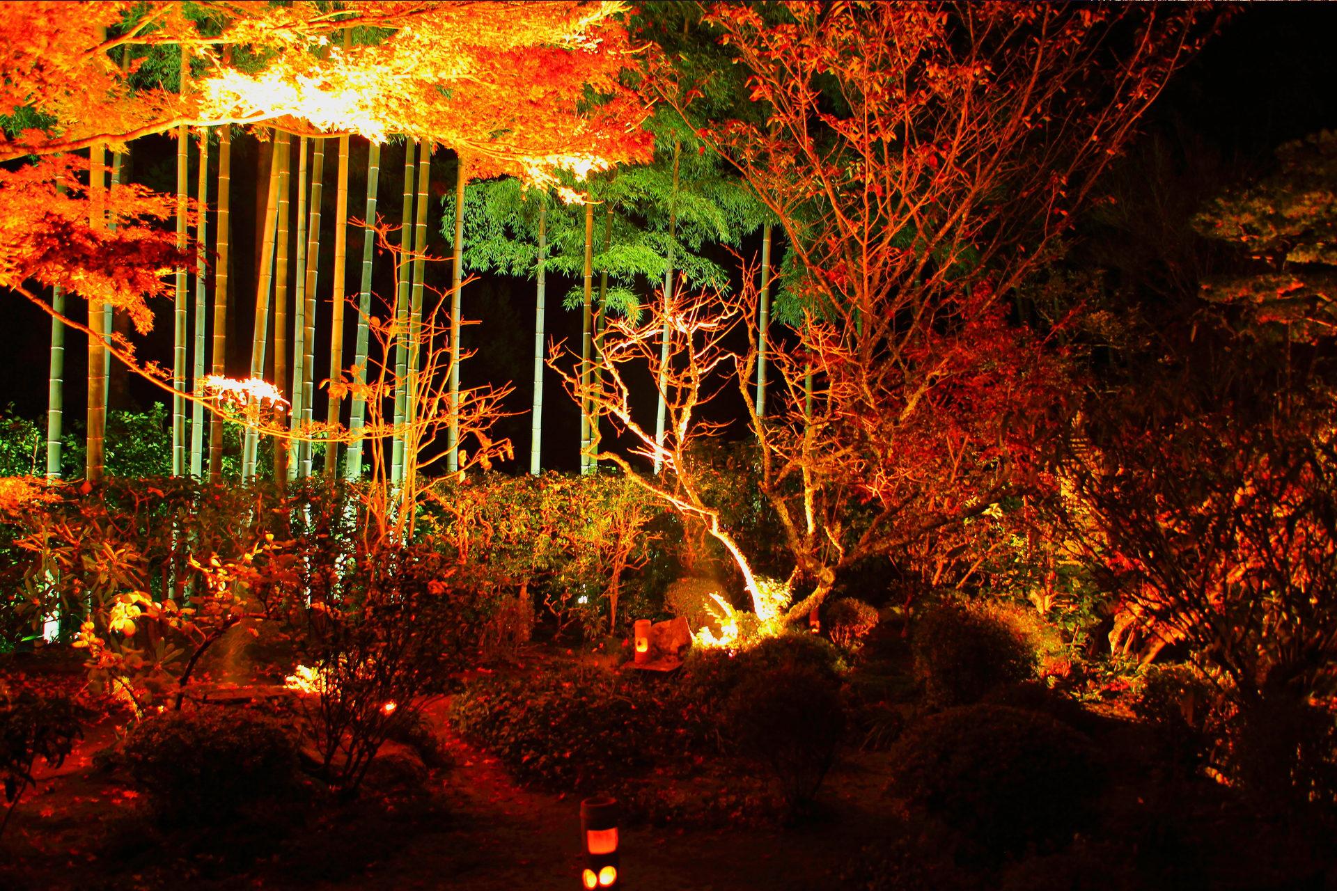 宝泉院 紅葉