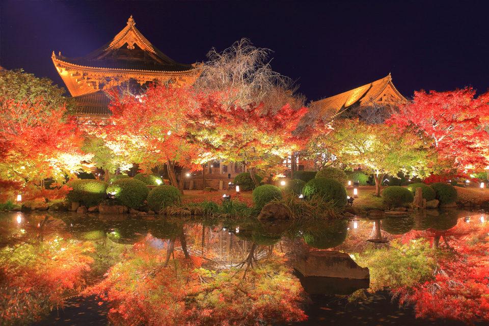 東寺の紅葉(夜間特別拝観)