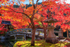 In eyes of Japanese, Kyoto red leaves are very beautiful. But how about foreigners? Are there any fall foliage cultures other than Japan?