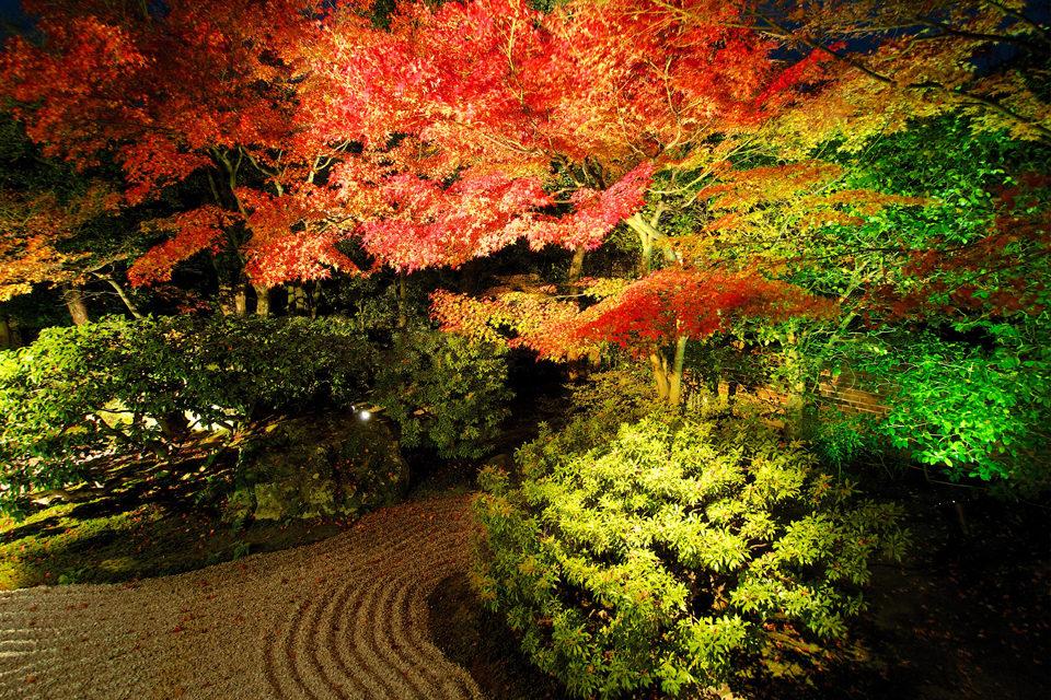 高台寺圓徳院の紅葉ライトアップ