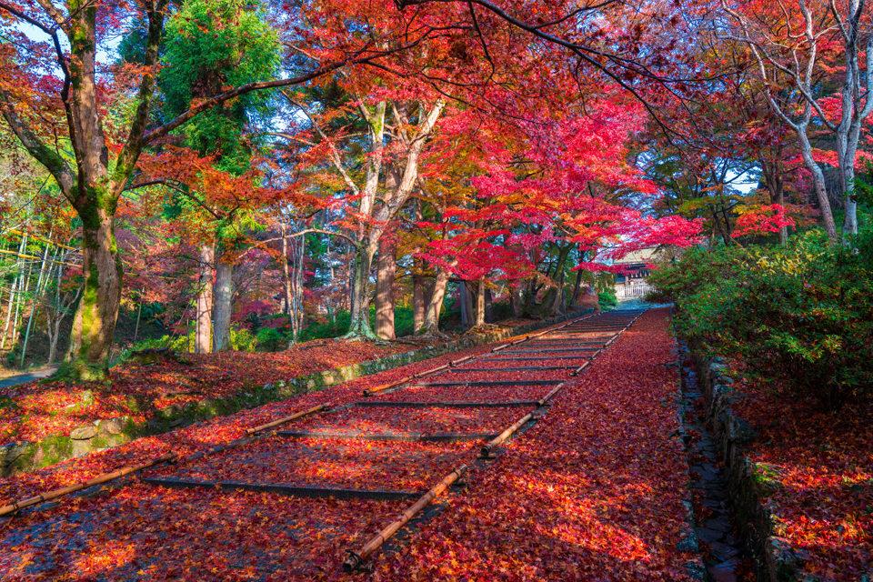 京都毘沙門堂の紅葉