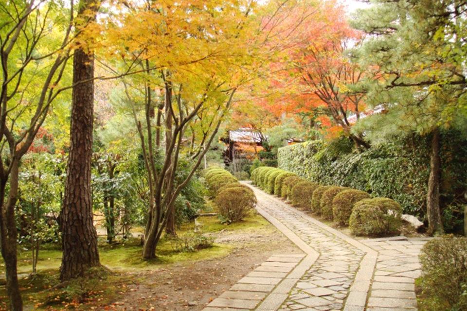 京都の秋に浸りたいなら大徳寺!美しい紅葉を堪能することができる見どころをご紹介!!