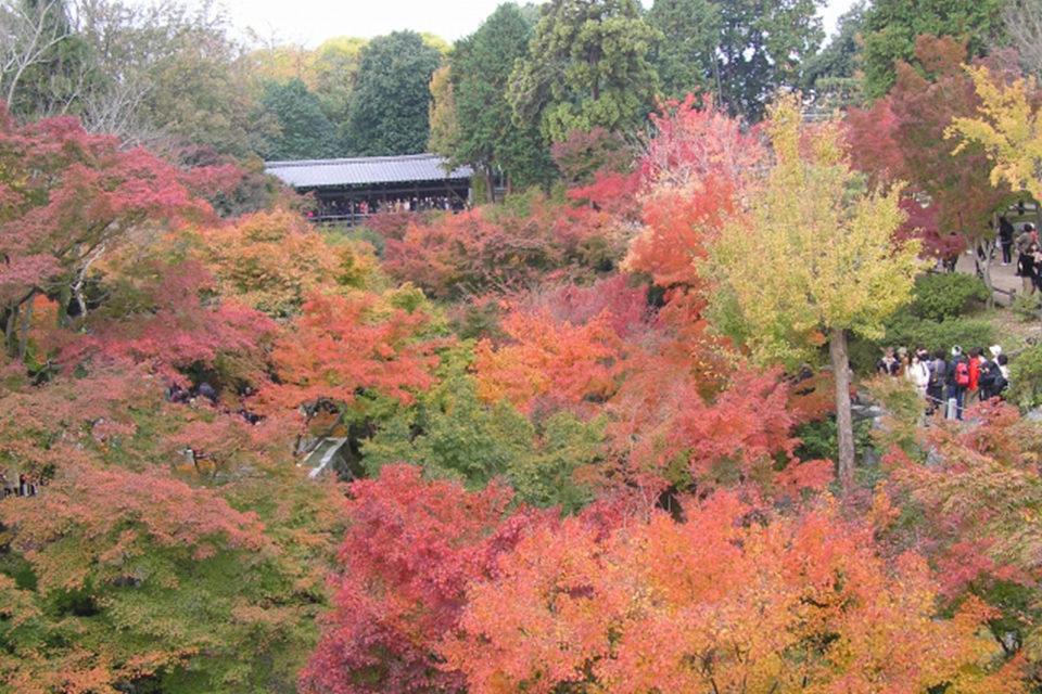 紅葉と橋の美しい調和はSNS映えも狙える!古都京都らしい写真が撮れると話題の寺院・観光スポットをご紹介!