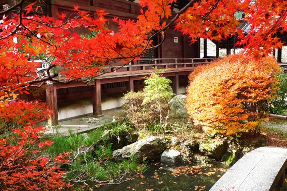 秋の京都観光、山科界隈もお忘れなく。毘沙門堂は、嵐山や東山にも劣らない紅葉名勝です。