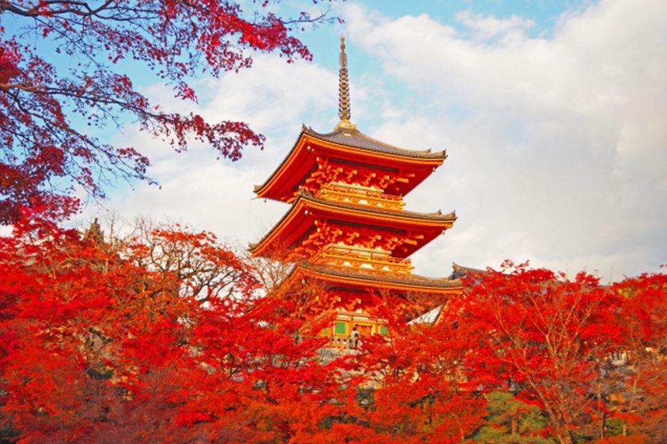 有名な紅葉名所が次々とピークを迎える11月下旬に照準を合わせた京都散策のツボをご紹介します。