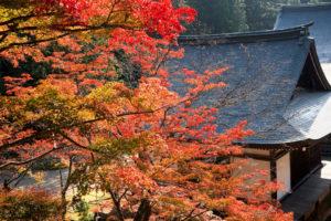 秋の神護寺