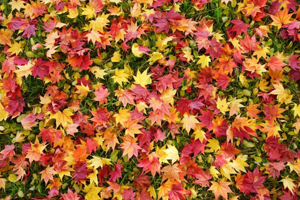 紅葉狩りスポットの穴場!京都植物園で美しい紅葉を楽しむ方法をご紹介!